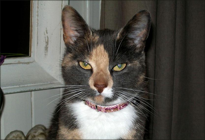 Katten Thelma (2) ble funnet torturert og drept, grusomme mennesker! thumbnail