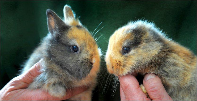 «Til» – Han kunne blitt Tysklands nye kjæledegge. Så tråkket fotografen kaninen ihjel! thumbnail
