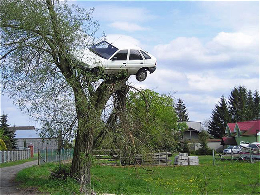 BIL I PIL: Naboer skal ha blitt så irritert over villmannskjøringen til bilens eier at de parkerte bilen hans i et piletre. Foto: Photonews