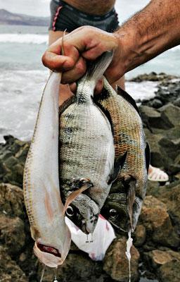 fisksakweb1.jpg