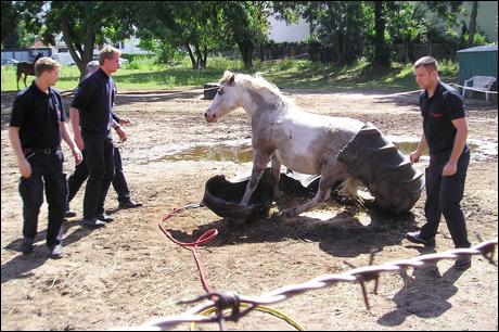 pferde in not zu verschenken
